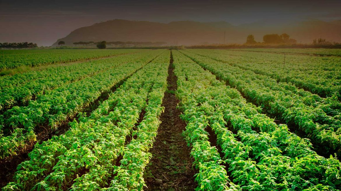 field of basil - how we work with our customers