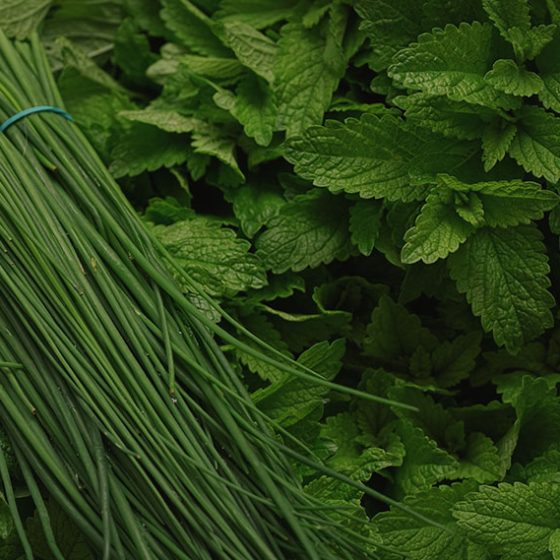 fresh cut chives and mint