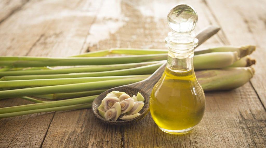 bottle of lemongrass oil and fresh lemongrass