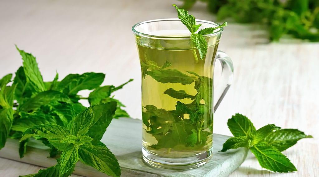 Fresh mint tea in glass
