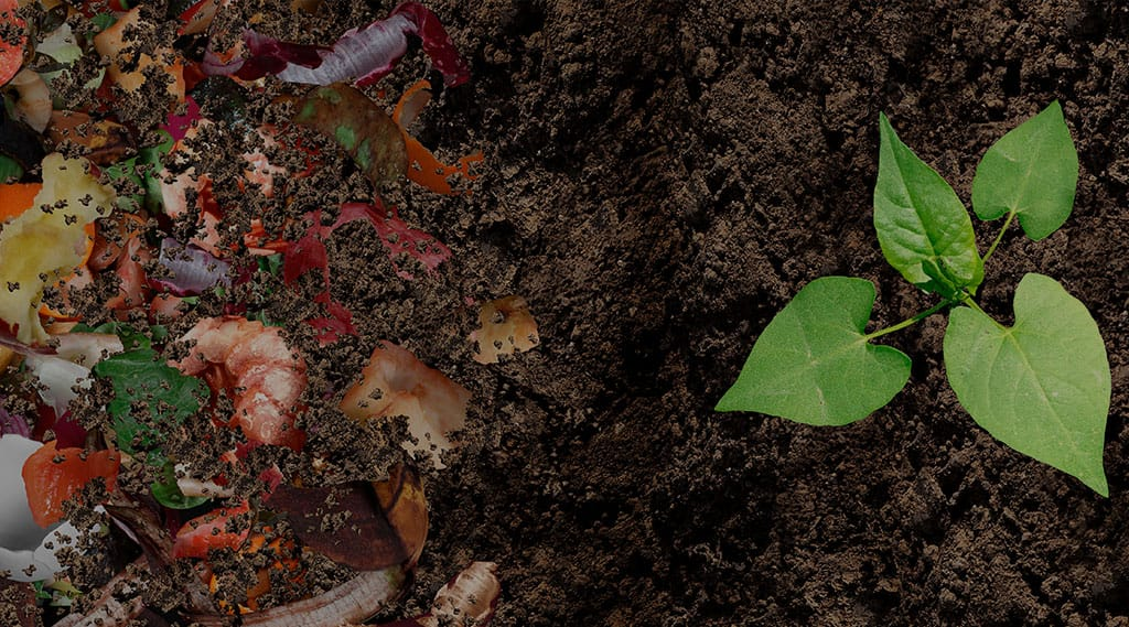 From food waste to new food