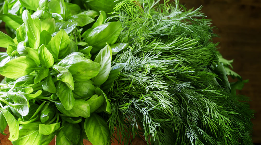 bunch of basil and dill herbs